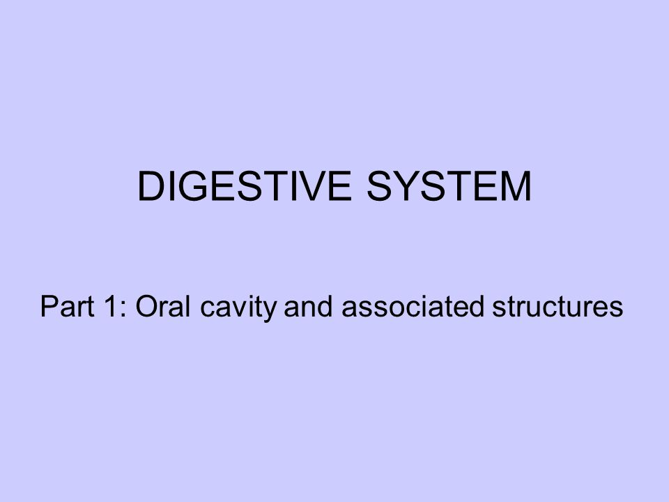 DIGESTIVE SYSTEM Part 1: Oral cavity and associated structures