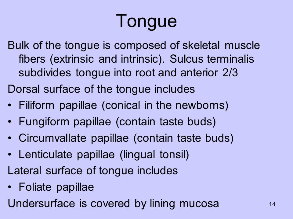 Tongue Bulk of the tongue is composed of skeletal muscle fibers (extrinsic and intrinsic).