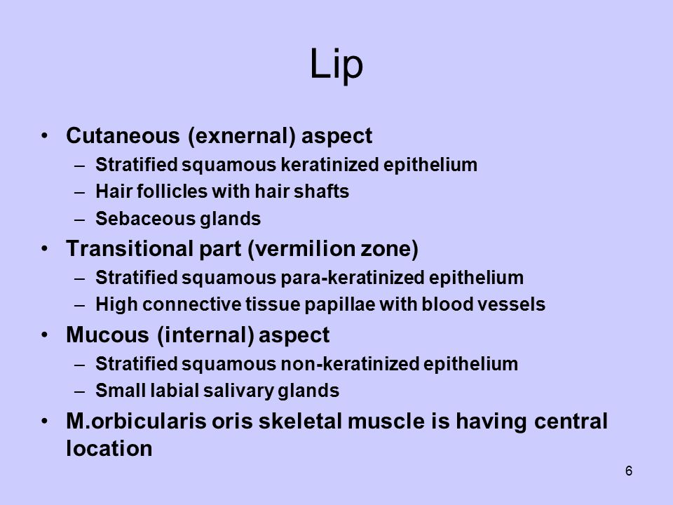 Taste buds include Basal cells (type IV cells) Dark cells (type I cells) Light cells (type II cells) Intermediate cells (type III cells) 17