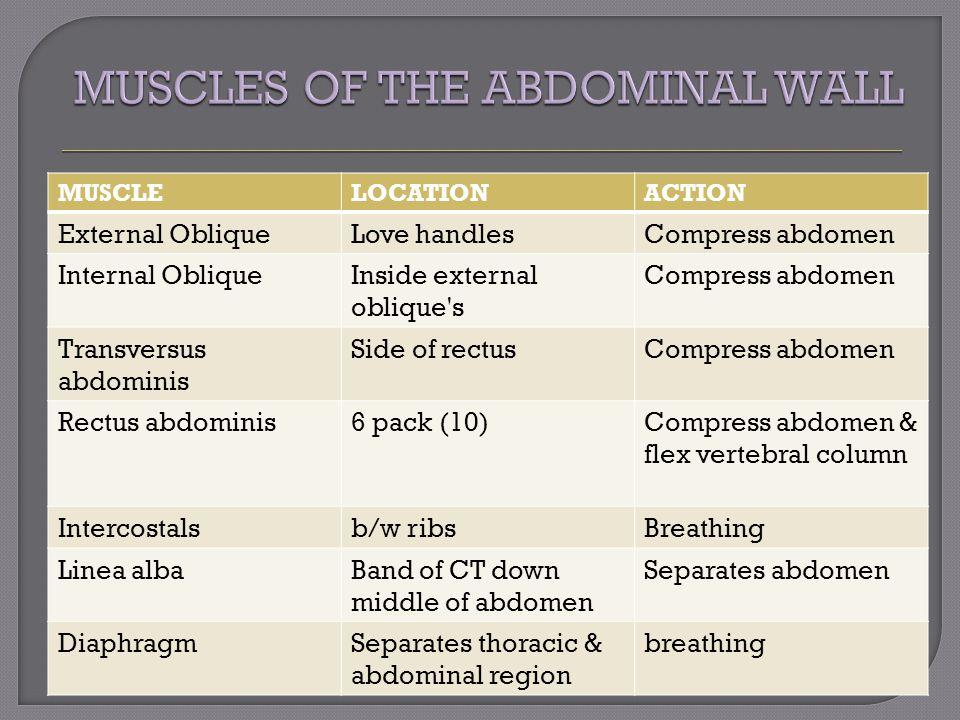 MUSCLELOCATIONACTION External ObliqueLove handlesCompress abdomen Internal ObliqueInside external oblique's Compress abdomen Transversus abdominis Sid