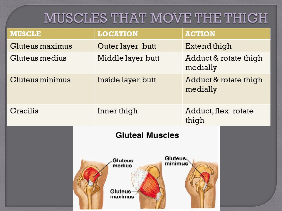 MUSCLELOCATIONACTION Gluteus maximusOuter layer buttExtend thigh Gluteus mediusMiddle layer buttAdduct & rotate thigh medially Gluteus minimusInside l