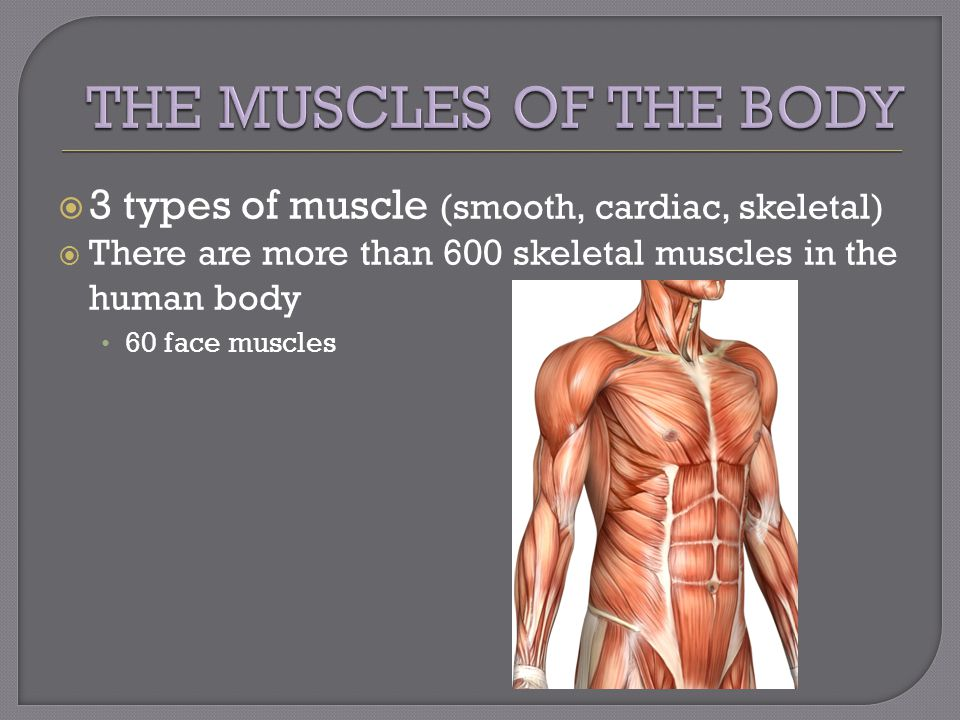  3 types of muscle (smooth, cardiac, skeletal)  There are more than 600 skeletal muscles in the human body 60 face muscles