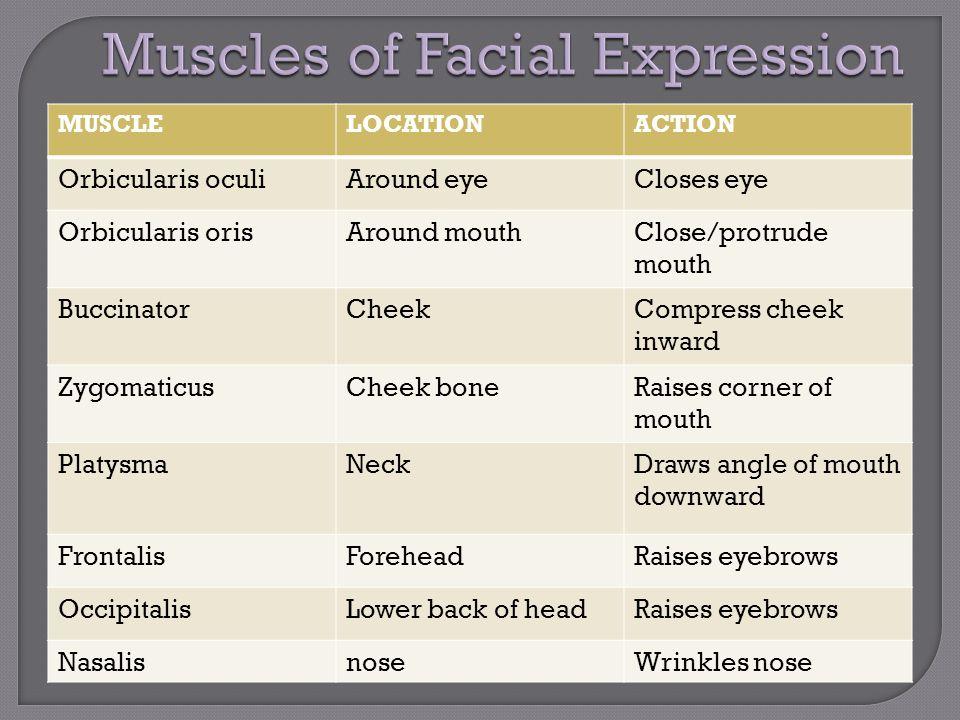MUSCLELOCATIONACTION Orbicularis oculiAround eyeCloses eye Orbicularis orisAround mouthClose/protrude mouth BuccinatorCheekCompress cheek inward Zygom