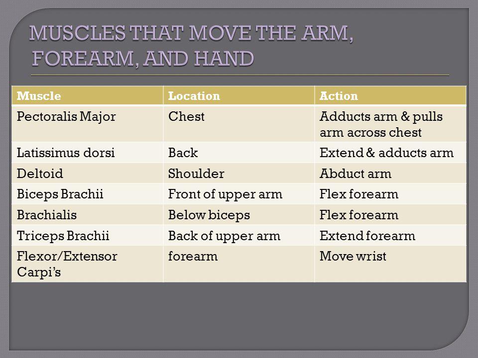 MuscleLocationAction Pectoralis MajorChestAdducts arm & pulls arm across chest Latissimus dorsiBackExtend & adducts arm DeltoidShoulderAbduct arm Bice