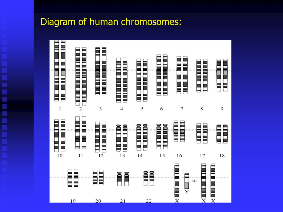 THESE ARE HUMAN CHROMOSOMES