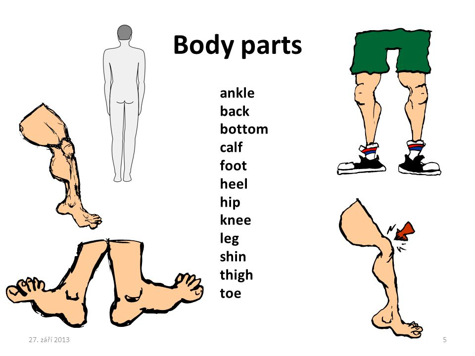 Body parts ankle back bottom calf foot heel hip knee leg shin thigh toe 27. září 20135
