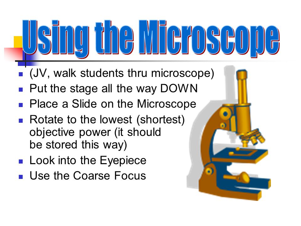 Eyepiece (ocular lens) Body Tube Revolving nosepiece Arm Objective Lenses Stage Stage/slide holder Coarse Focus Fine Focus Base Condenser & Iris Diaphragm Light (lamp) Animation: Starr Ch 4 How a Microscope Works