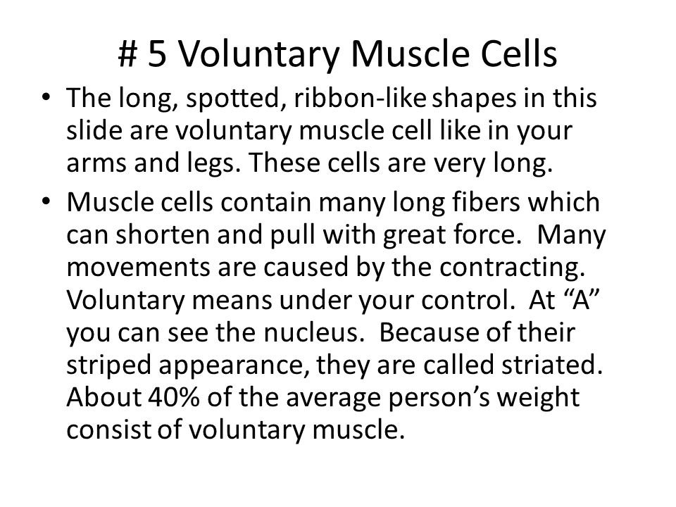 # 5 Voluntary Muscle Cells The long, spotted, ribbon-like shapes in this slide are voluntary muscle cell like in your arms and legs. These cells are v