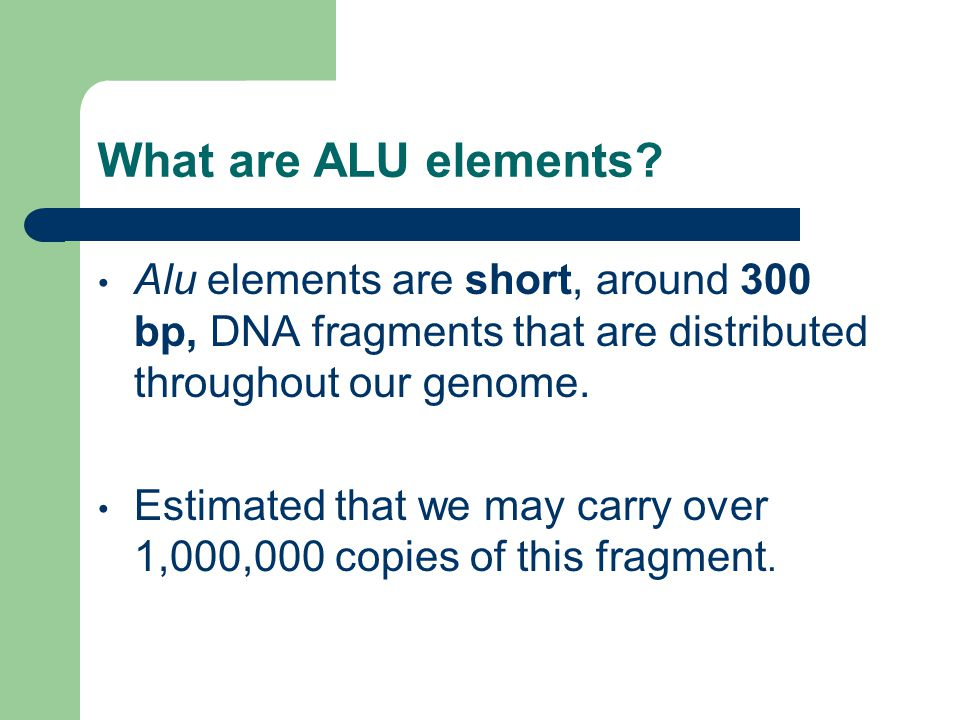 What are ALU elements.