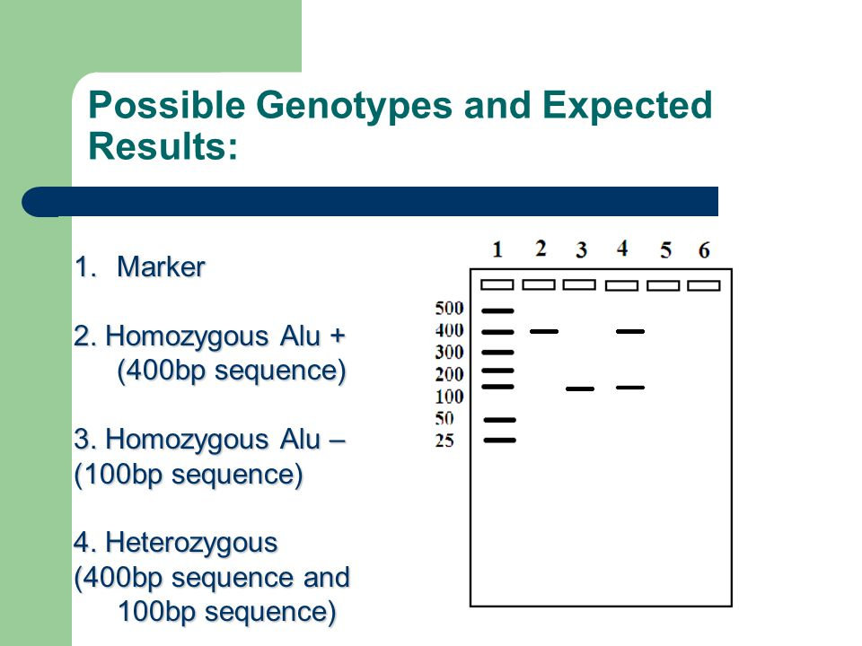 Possible Genotypes and Expected Results: 1.Marker 2.