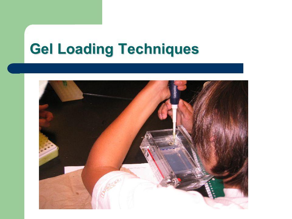 Gel Loading Techniques