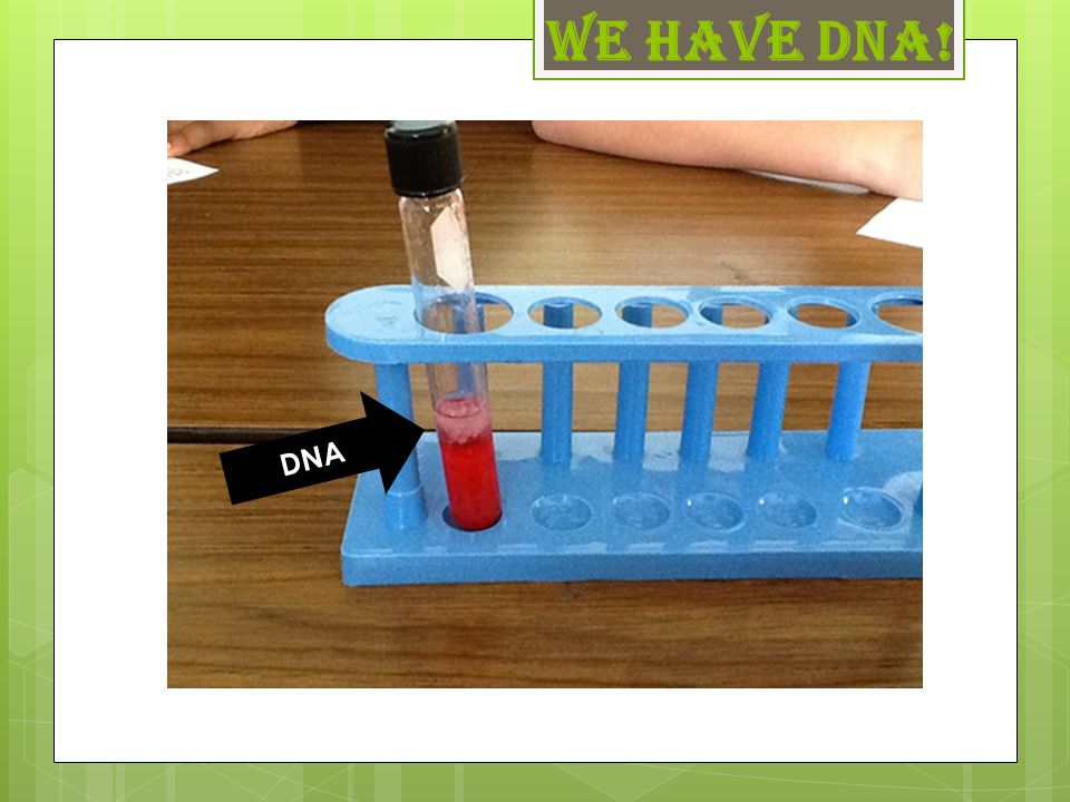 We have DNA! DNA