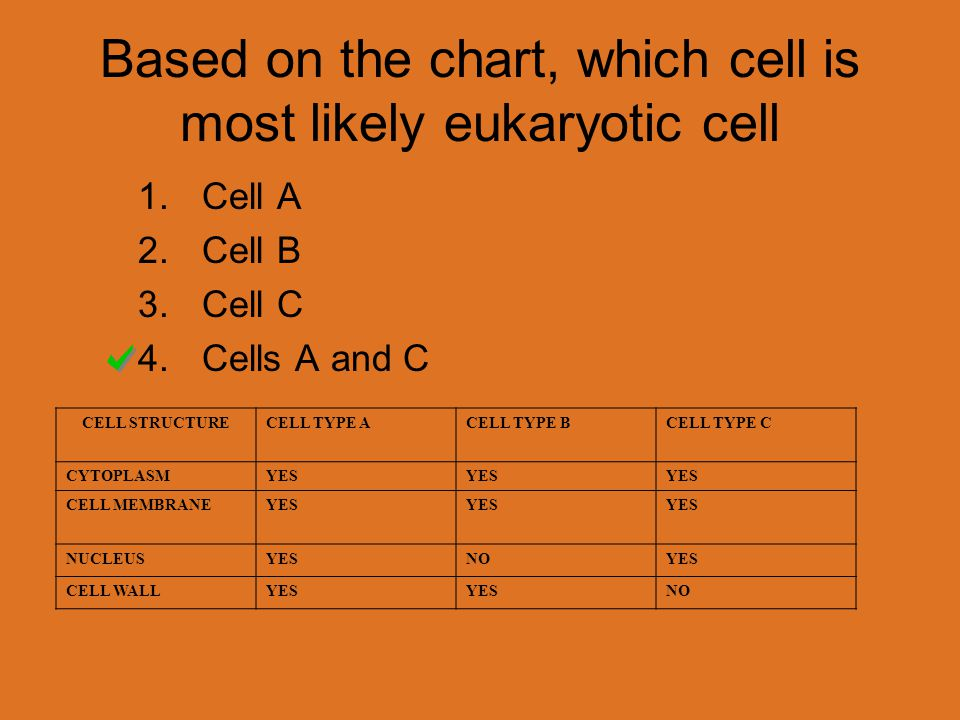 Based on the chart, which cell is most likely eukaryotic cell CELL STRUCTURECELL TYPE ACELL TYPE BCELL TYPE C CYTOPLASMYES CELL MEMBRANEYES NUCLEUSYESNOYES CELL WALLYES NO 1.Cell A 2.Cell B 3.Cell C 4.Cells A and C