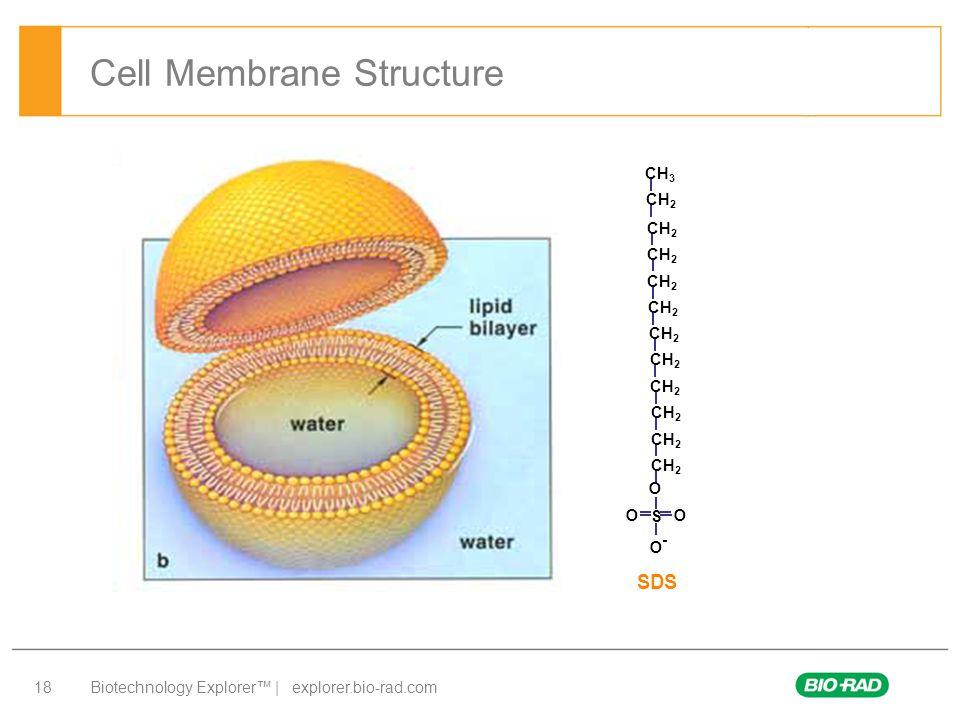 Biotechnology Explorer™ | explorer.bio-rad.com 18 Cell Membrane Structure O S O O O - CH 2 CH 3 SDS