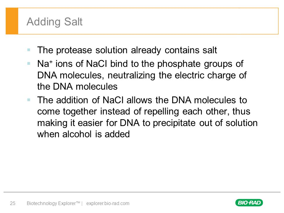 Biotechnology Explorer™ | explorer.bio-rad.com 25  The protease solution already contains salt  Na + ions of NaCI bind to the phosphate groups of DNA molecules, neutralizing the electric charge of the DNA molecules  The addition of NaCI allows the DNA molecules to come together instead of repelling each other, thus making it easier for DNA to precipitate out of solution when alcohol is added Adding Salt