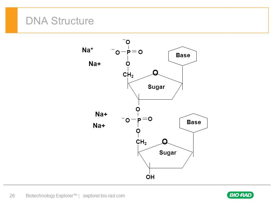 Biotechnology Explorer™ | explorer.bio-rad.com 26 DNA Structure Na + O CH 2 O P O O O Base CH 2 O P O O O Base OH Sugar O