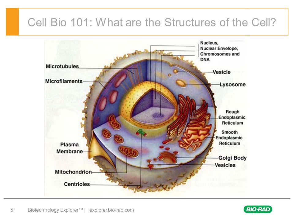 Biotechnology Explorer™ | explorer.bio-rad.com 6 Cell Structures