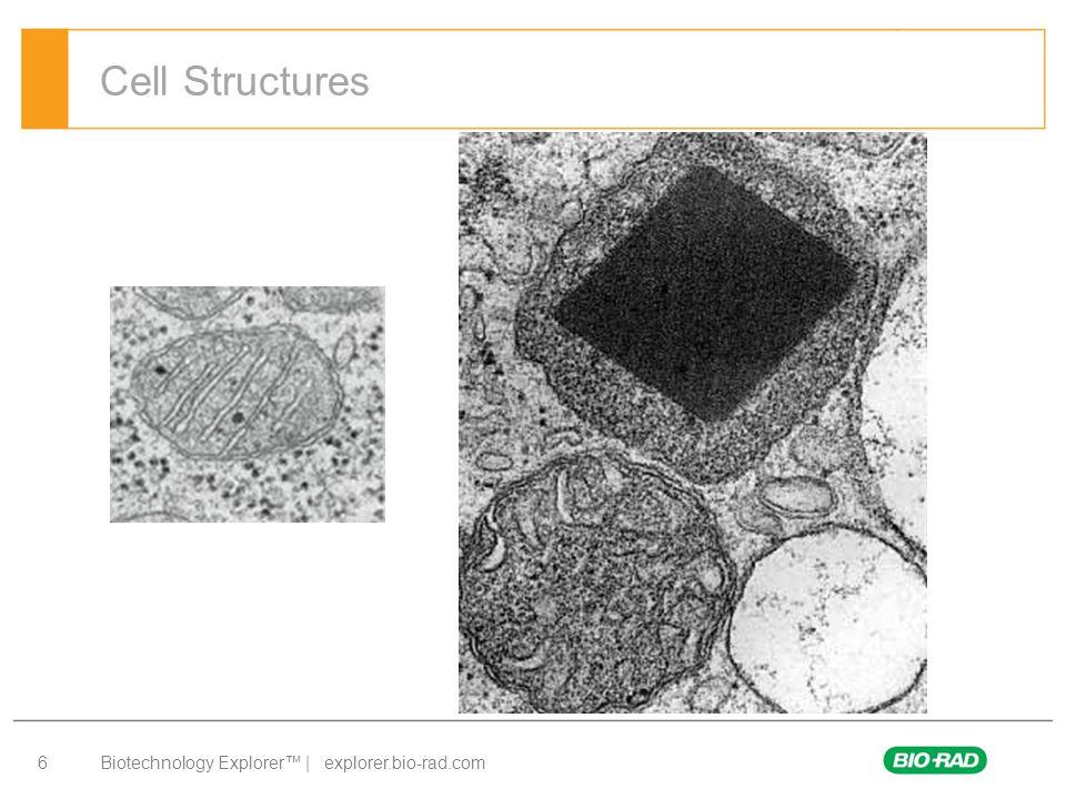 Biotechnology Explorer™ | explorer.bio-rad.com 7 Cell Structures