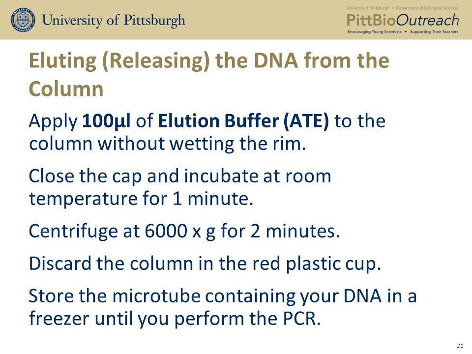 Eluting (Releasing) the DNA from the Column Apply 100μl of Elution Buffer (ATE) to the column without wetting the rim.