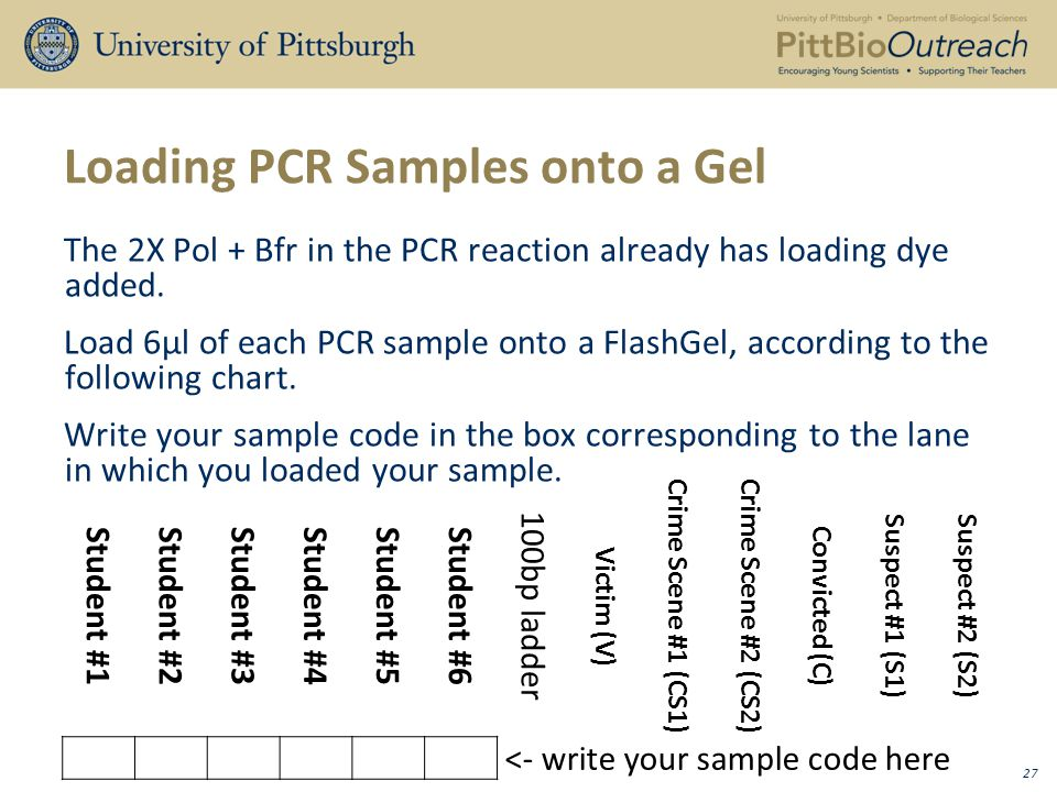 Loading PCR Samples onto a Gel The 2X Pol + Bfr in the PCR reaction already has loading dye added.