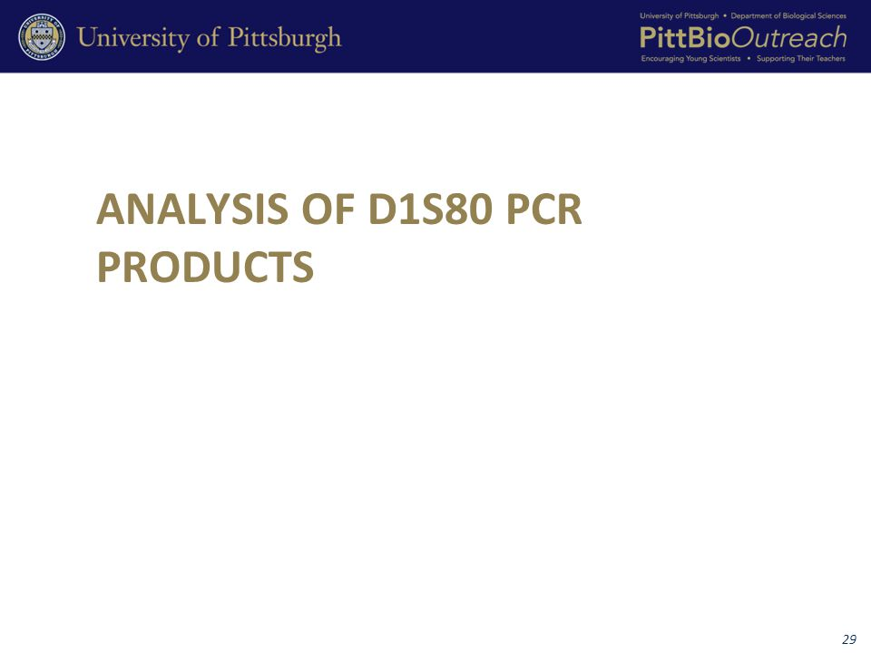 ANALYSIS OF D1S80 PCR PRODUCTS 29
