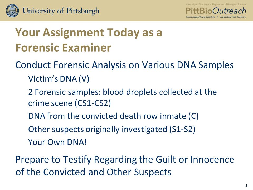 Your Assignment Today as a Forensic Examiner Conduct Forensic Analysis on Various DNA Samples Victim's DNA (V) 2 Forensic samples: blood droplets collected at the crime scene (CS1-CS2) DNA from the convicted death row inmate (C) Other suspects originally investigated (S1-S2) Your Own DNA.