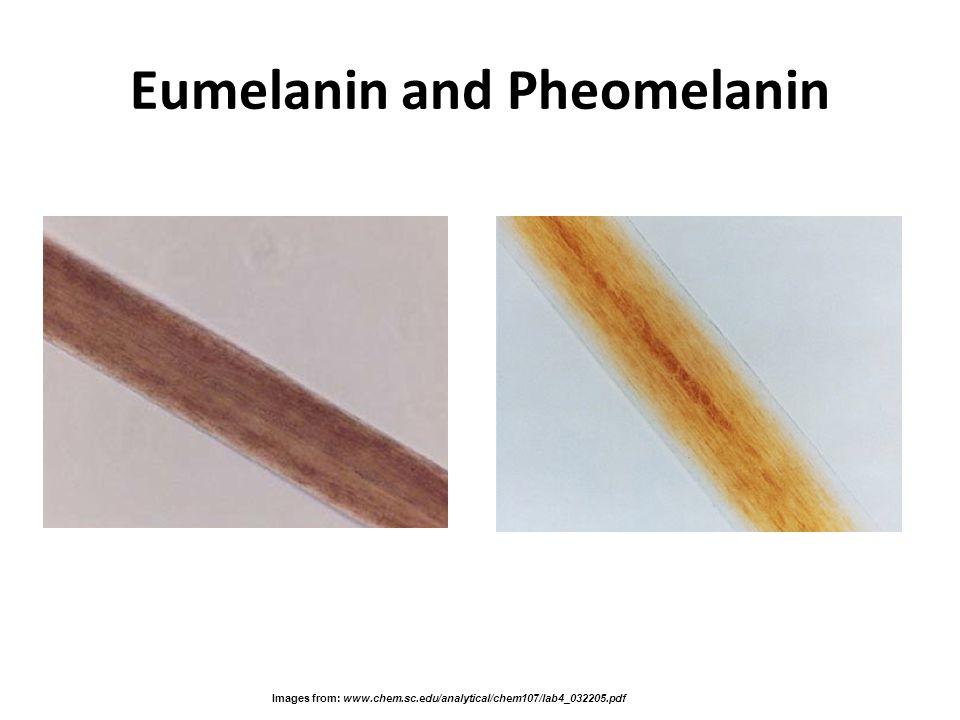 Eumelanin and Pheomelanin Images from: www.chem.sc.edu/analytical/chem107/lab4_032205.pdf