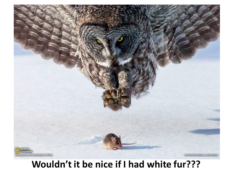 Wouldn't it be nice if I had white fur???