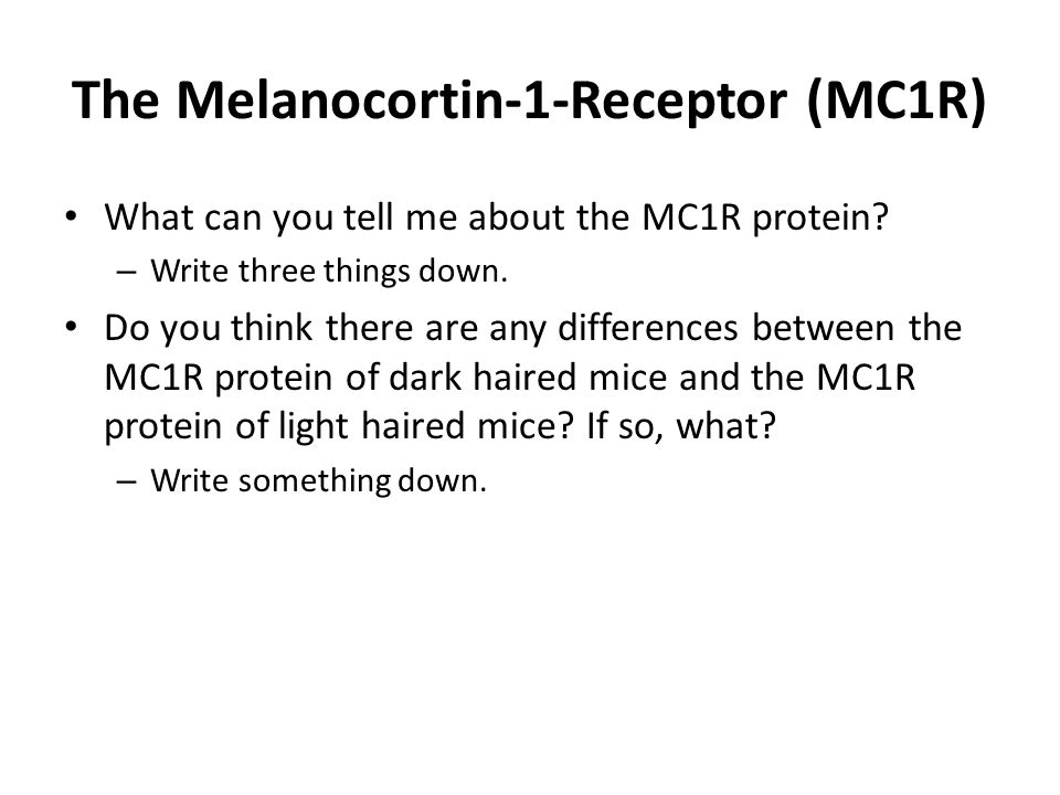 The Melanocortin-1-Receptor (MC1R) What can you tell me about the MC1R protein? – Write three things down. Do you think there are any differences betw