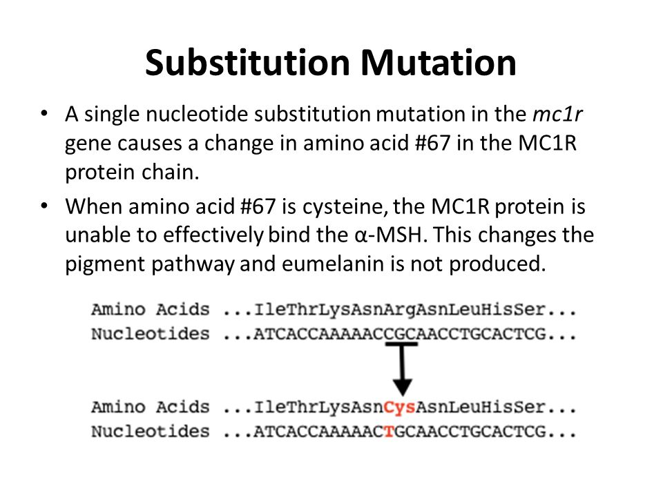 Substitution Mutation A single nucleotide substitution mutation in the mc1r gene causes a change in amino acid #67 in the MC1R protein chain. When ami