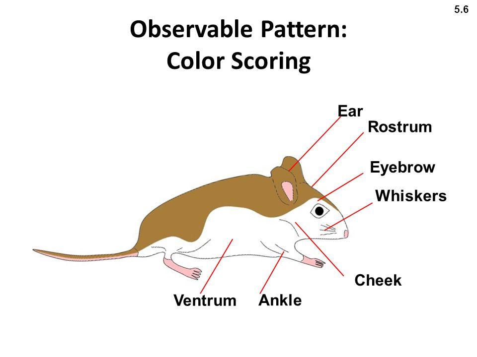 Observable Pattern: Color Scoring Ear Cheek Eyebrow Whiskers Rostrum Ankle Ventrum 5.6