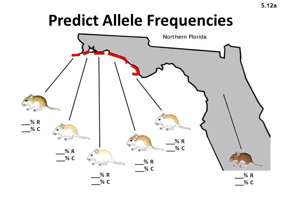 Predict Allele Frequencies ___% R ___% C ___% R ___% C ___% R ___% C ___% R ___% C ___% R ___% C ___% R ___% C 5.12a