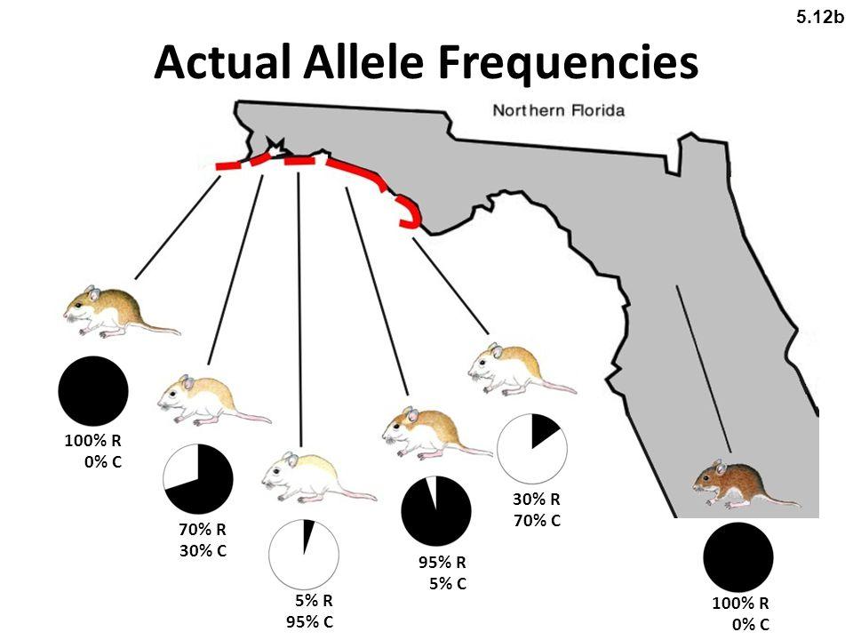 Actual Allele Frequencies 100% R 0% C 70% R 30% C 95% R 5% C 30% R 70% C 5% R 95% C 100% R 0% C 5.12b