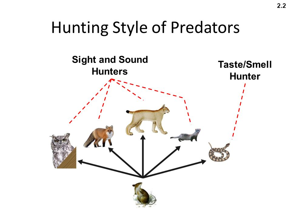 Hunting Style of Predators Sight and Sound Hunters Taste/Smell Hunter 2.2