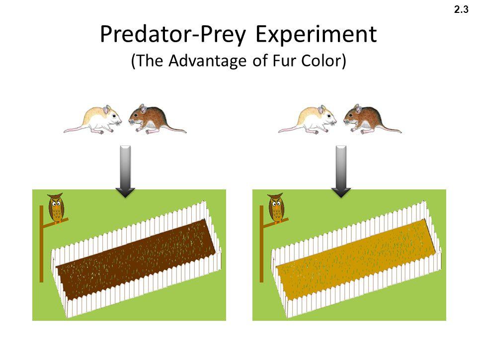 Predator-Prey Experiment (The Advantage of Fur Color) 2.3