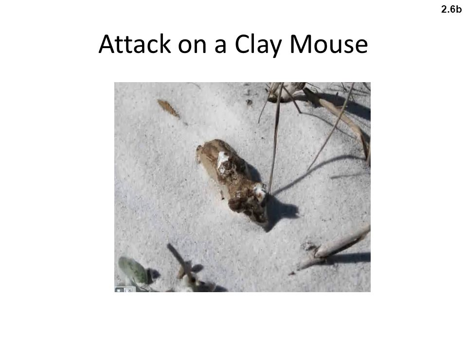Attack on a Clay Mouse 2.6b