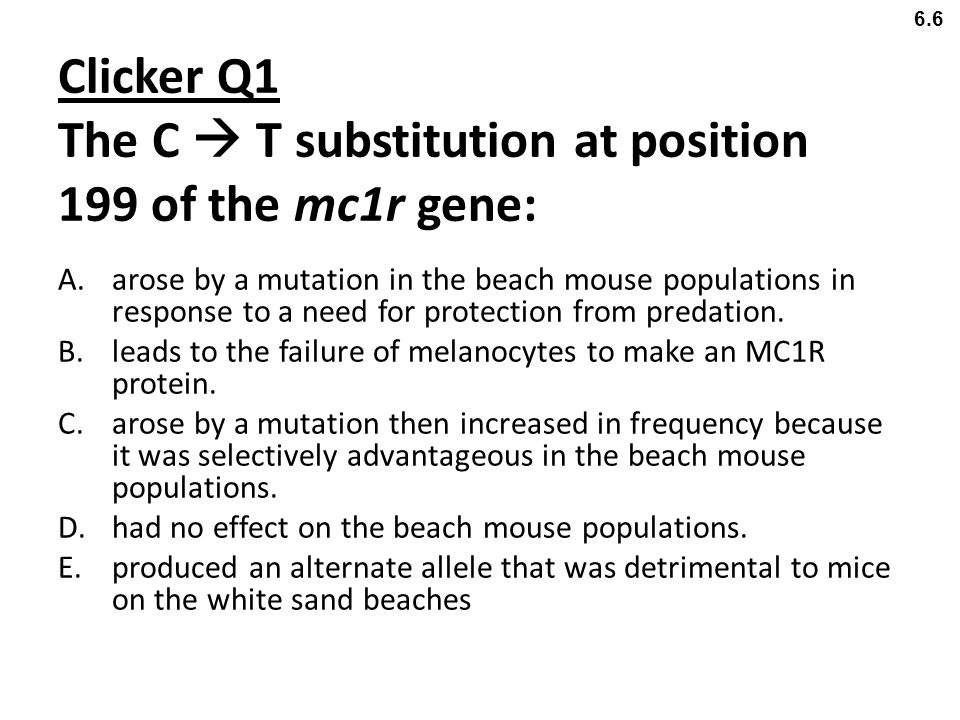 Clicker Q1 The C  T substitution at position 199 of the mc1r gene: A.arose by a mutation in the beach mouse populations in response to a need for pro