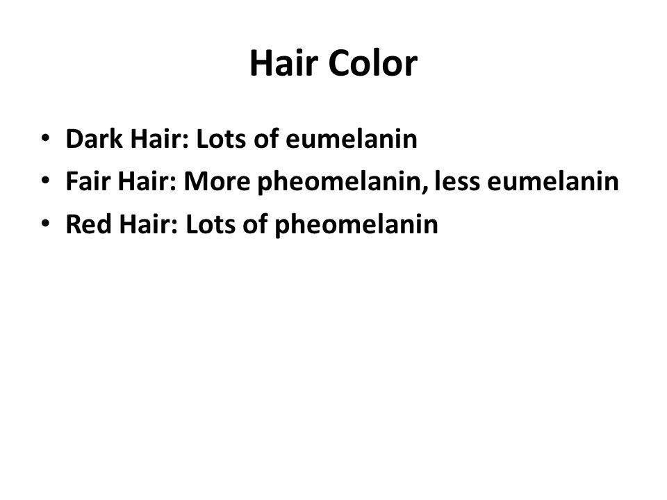 Hair Color Dark Hair: Lots of eumelanin Fair Hair: More pheomelanin, less eumelanin Red Hair: Lots of pheomelanin