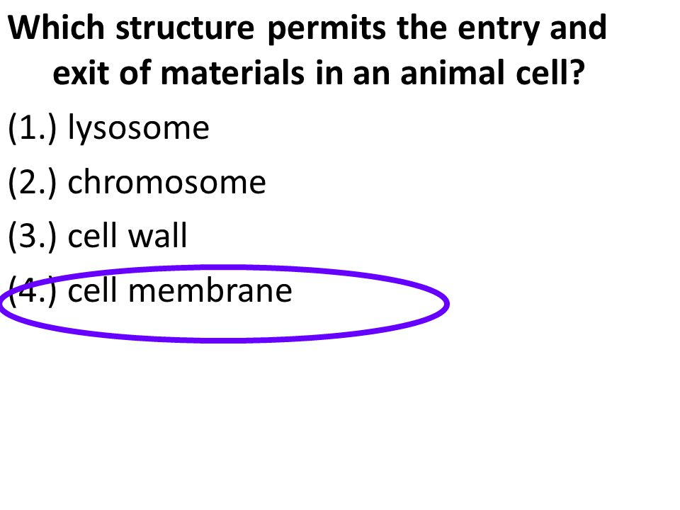 Which structure permits the entry and exit of materials in an animal cell? (1.) lysosome (2.) chromosome (3.) cell wall (4.) cell membrane