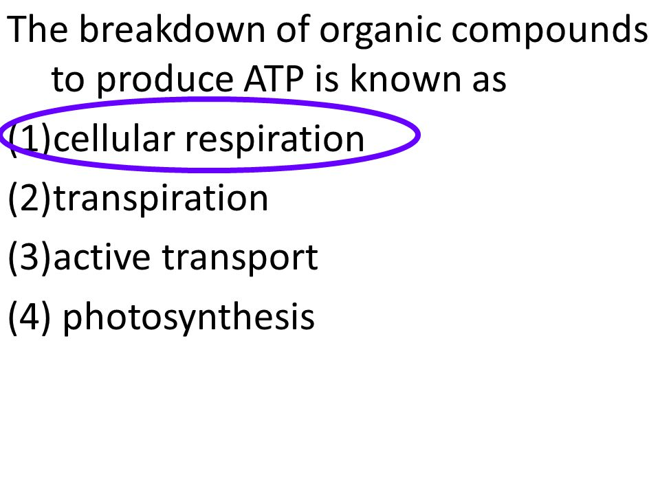 The breakdown of organic compounds to produce ATP is known as (1)cellular respiration (2)transpiration (3)active transport (4) photosynthesis
