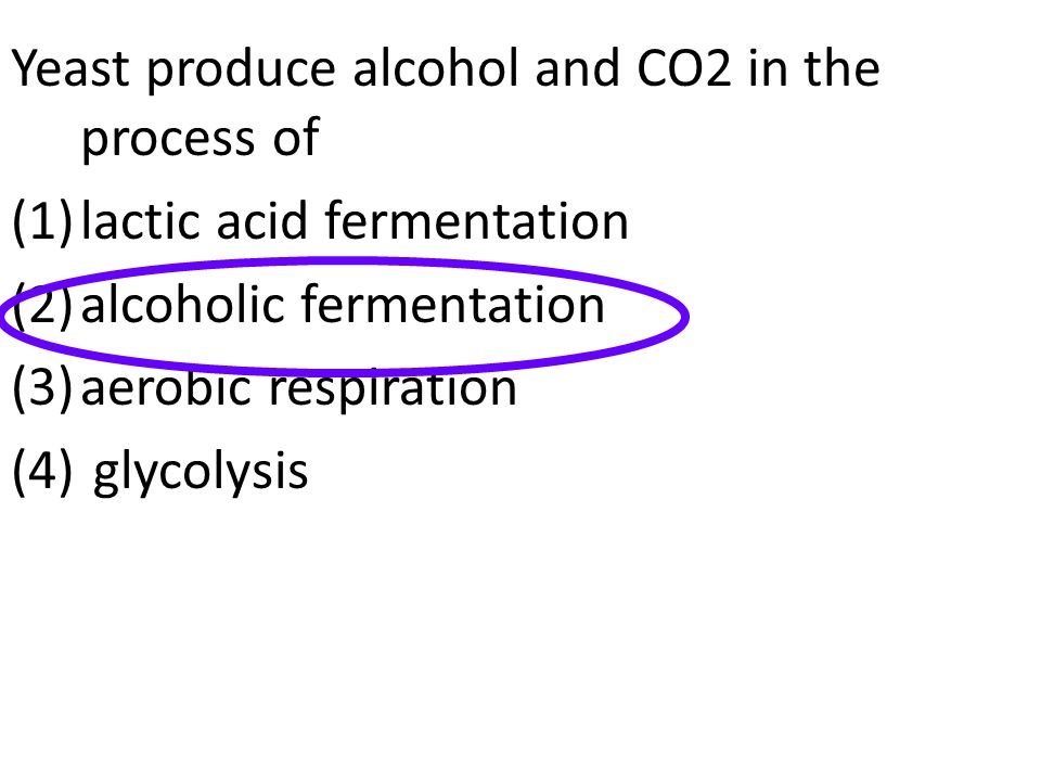 Yeast produce alcohol and CO2 in the process of (1)lactic acid fermentation (2)alcoholic fermentation (3)aerobic respiration (4) glycolysis