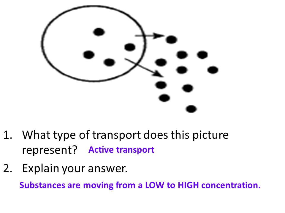 1.What type of transport does this picture represent? 2.Explain your answer. Active transport Substances are moving from a LOW to HIGH concentration.