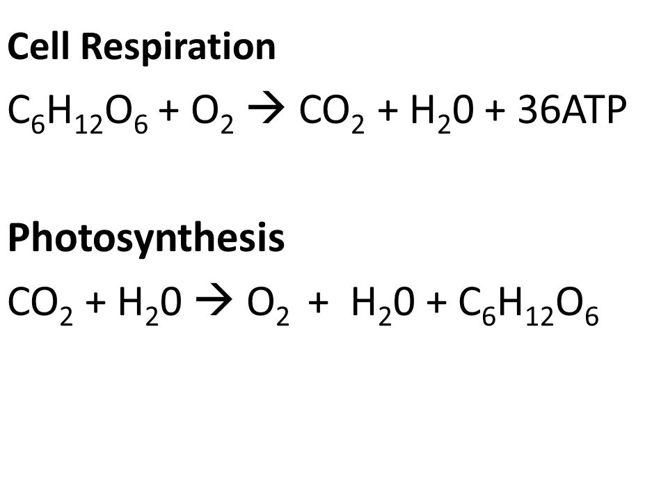 Topic Final Exam Review Aim Lets review Cells and Cell – Cellular Respiration and Photosynthesis Worksheet