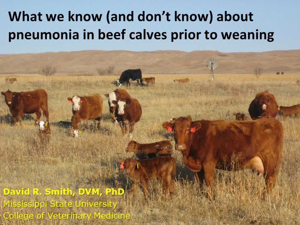 What we know (and don't know) about pneumonia in beef calves prior to weaning David R.