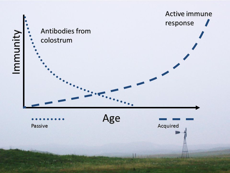 Immunity Active immune response PassiveAcquired Antibodies from colostrum Age