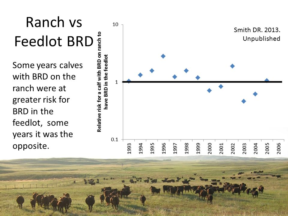 Ranch vs Feedlot BRD Some years calves with BRD on the ranch were at greater risk for BRD in the feedlot, some years it was the opposite.
