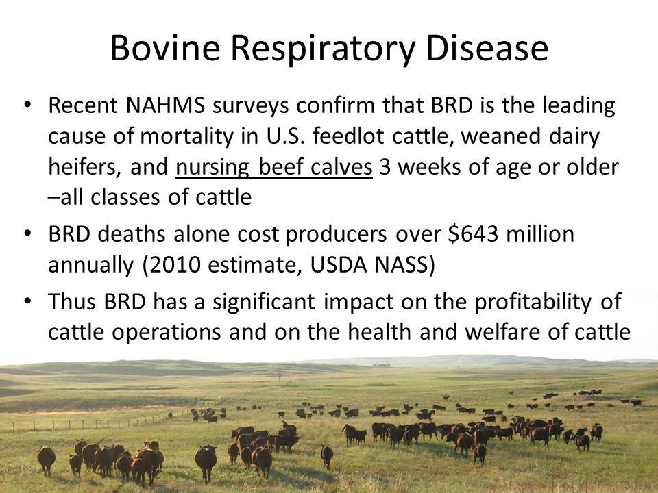 Epidemic Curve Herd 2 Epidemic curve of BRD in Herd 2.