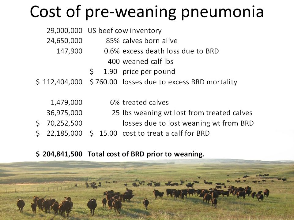 Cost of pre-weaning pneumonia