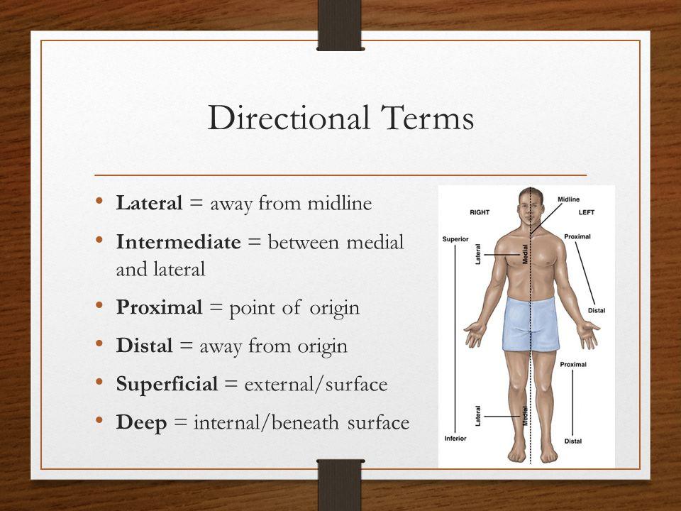 Regional Terms Cephalic = head Frontal = forehead Orbital = eye Nasal = nose Buccal = Cheek Occipital = base of skull