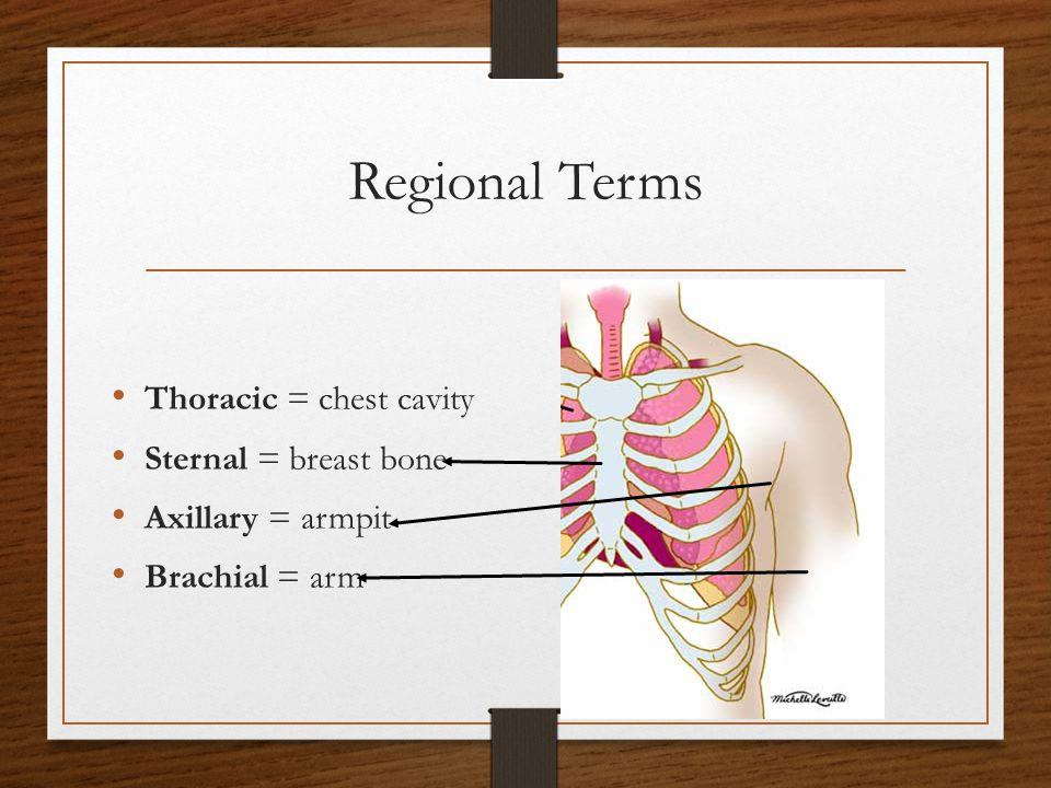Regional Terms Carpal = wrist Digital = fingers/toes Vertebral = spinal